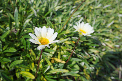 小さく可愛い白いお花