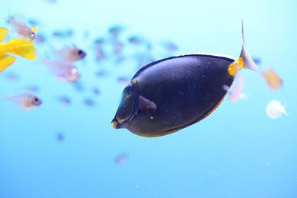 青くて綺麗な魚