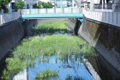 荻窪を流れる善福寺川