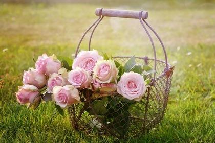 Middle roses 57e5d3454d 1280