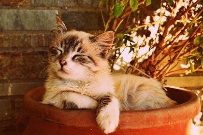 Middle kitten asleep in a pot 57e9dc4643 1280