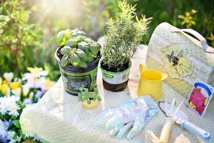 Middle planting 51e8d54449 1280