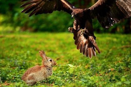 うさぎと鷹