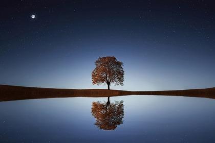 Middle tree 5ee3dd454c 1280