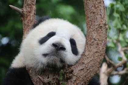 Middle panda 57e2d64542 1280