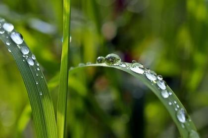 菜の花と菜種梅雨