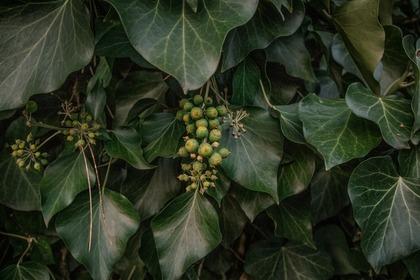 ダークグリーンの葉っぱ