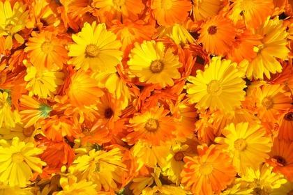 オレンジ色の可愛い花