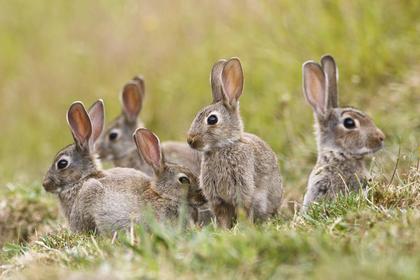ウサギたち