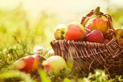 りんごの入ったカゴ
